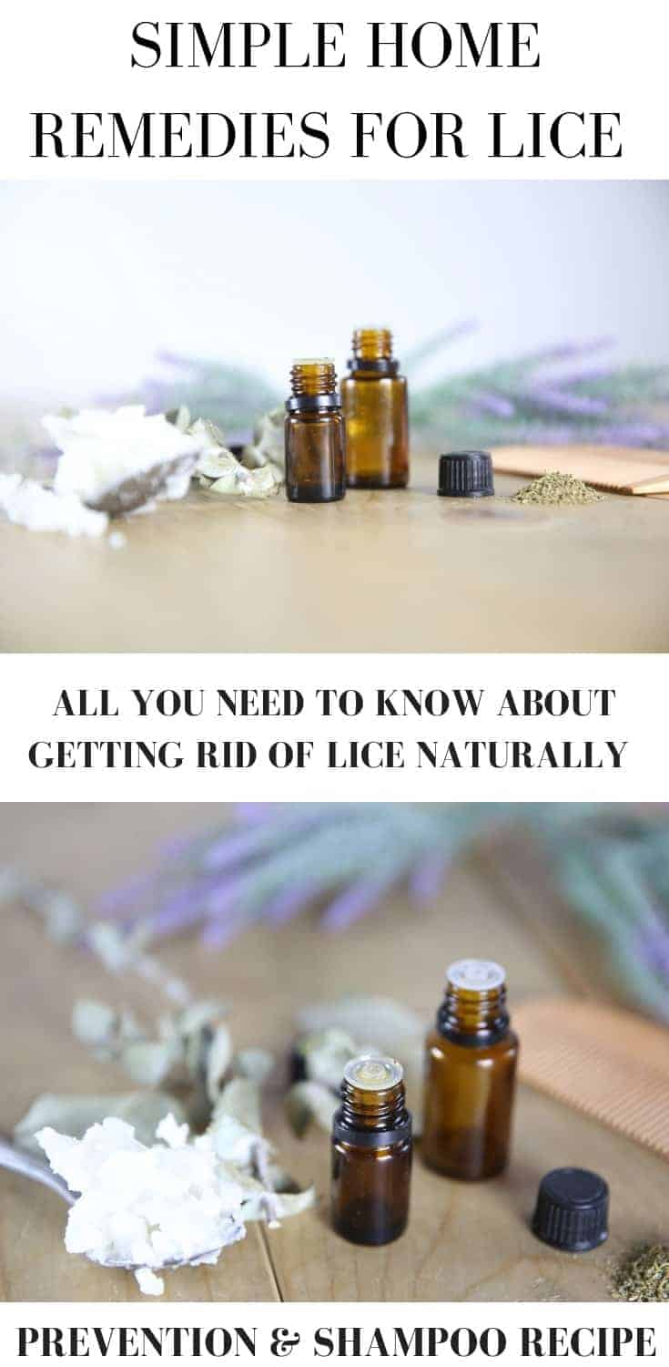 Simple home remedies for lice with prevention tips and a shampoo recipe.